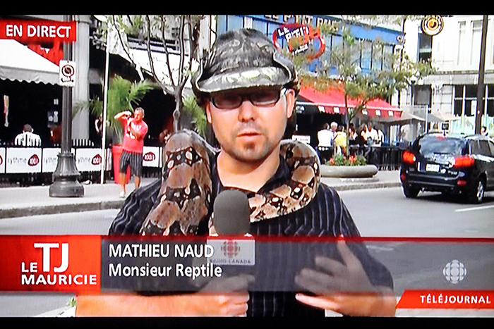 téléjournal-reptile-boa-web