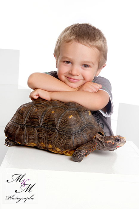 M&M-Tortue-web